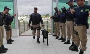 Labrador da polícia se aposenta e recebe homenagem no Paraná