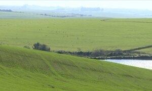 Chuva atrapalha plantio de trigo no RS e agricultores diminuem área