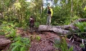 Mata Atlântica sofre com desmatamento até onde é protegida