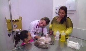 Veja a movimentada rotina de um hospital público veterinário em SP