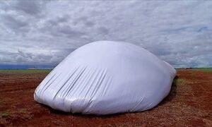 Silos-bolsa armazenam safra imensa de milho no Mato Grosso