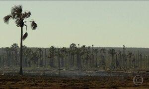 Fogo consome veredas do cerrado mineiro e ameaça florestas e rios