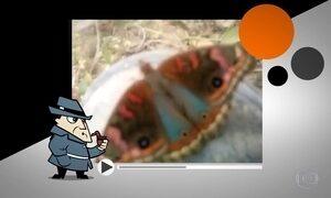 Detetive investiga borboleta com imagem de Nossa Senhora Aparecida