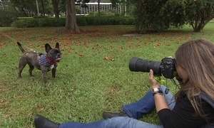 Foto de animais vira moda e cria oportunidades no mercado pet