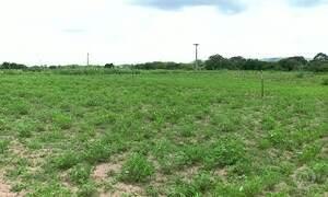Chuva dos primeiros meses no ano anima agricultores no Cariri cearense