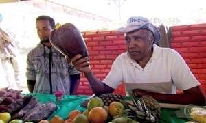 Agricultores do Cerrado plantam diversidade para resgatar o passado