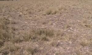 Seca na Argentina afeta produção de grãos
