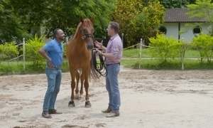 Hoje é dia de cavalo: o superstar e o encantador