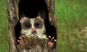 Bichos Espiões são infiltrados para entender comportamento dos animais