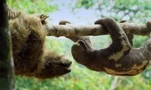 Câmeras dos Bichos Espiões flagram animais em momentos de higiene