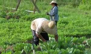 Projeto une agricultores e consumidores de produtos orgânicos
