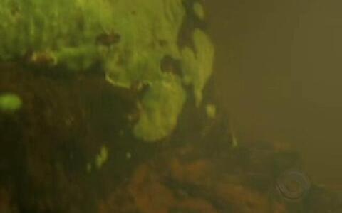 Esponja de água doce encontrada em parque do RS é única no mundo