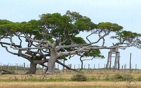 Ilha da Feitoria é uma paraíso isolado no Sul
