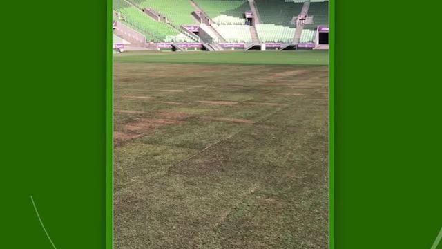 Veja como está o gramado da Arena Palmeiras