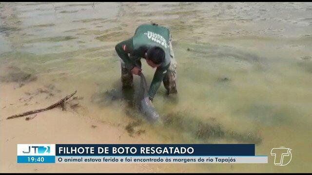 Filhote de boto encontrado encalhado no Rio Tapajós é resgatado e levado a zoológico