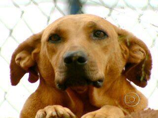 Cadela solidária enfrenta perigo da estrada para alimentar amigos