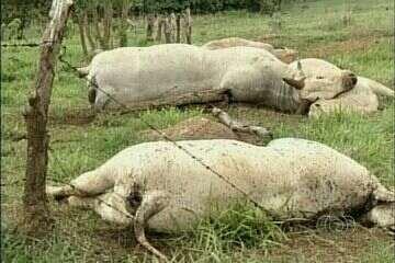 Fio de energia se rompe e descarga elétrica mata quatro vacas em GO