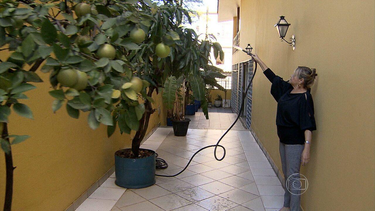 Veja como cultivar árvores frutíferas em pequenos espaços