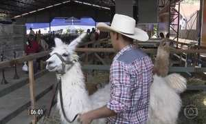 Animais exóticos atraem milhares de pessoas a Londrina, no PR