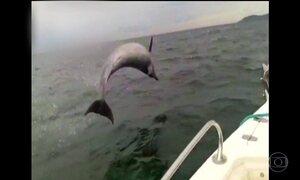 Pescadores registram grupo de golfinhos perto da embarcação em Garopaba