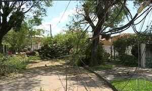 Árvores caídas no temporal da semana passada em SP ainda bloqueiam ruas