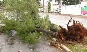 Chuva forte derruba árvores e alaga ruas em Goiânia