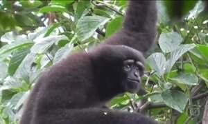 Nova espécie de macaco ganha nome em homenagem a 'Star Wars'