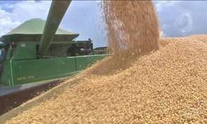 Próxima safra de grãos será recorde no Brasil