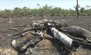 Queimadas consomem hectares no AM e geram prejuízo para agricultores