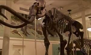 Cientistas tentam recriar espécies extintas há milhares de anos
