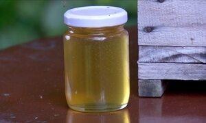 Criador dá orientações sobre como conservar o mel de abelha jataí