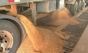 Produtores rurais têm dificuldade para armazenar a safrinha de milho em GO