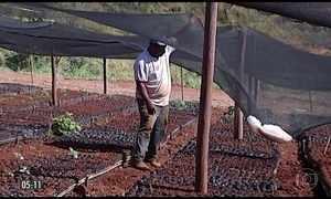 Granizo provoca perdas em lavouras de café de MG