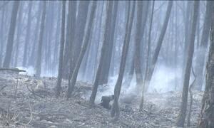 Defesa Civil diz que incêndio florestal em Portugal está quase controlado