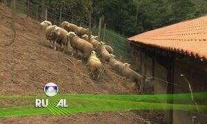 Globo Rural - Edição de 09/07/2017