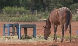 Veterinário dá orientações para a criação de cavalos em espaços pequenos