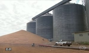 Falta de armazéns para estocar a safra de grãos causa problemas a agricultores de MT