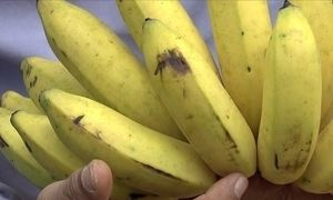 Saiba como combater rachaduras nas cascas de banana