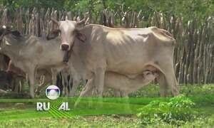 Globo Rural – Edição de 24/09/2017