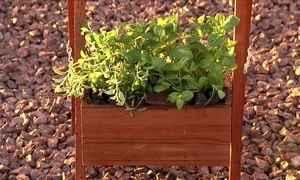Como montar uma pequena horta com condimentos?
