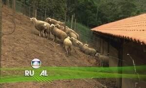Globo Rural - Edição de Domingo, 15/10/2017