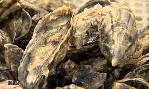 Secretaria da Pesca suspende o cultivo de ostras e mexilhões em SC