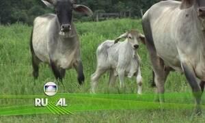 Globo Rural - Edição de 22/10/2017