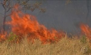 Novo incêndio destrói parque da Chapada dos Veadeiros (GO)