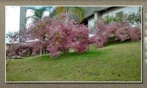 Congeia ou côngea é um tipo de trepadeira florida