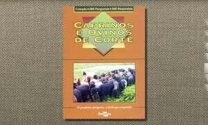 Folheto reúne informações para criação de carneiros de corte