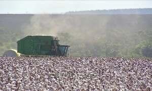 IBGE e CONAB divulgam estimativas para a safra de grãos
