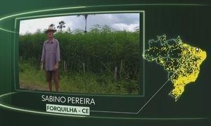 Vídeos de Forquilha, Nova Santa Helena, Piracema, Tocantinópolis, Estrela de Alagoas