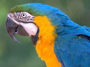 Turma do Zoológico também presta homenagem ao aniversário do Louro - Mais Você homenageia o papagaio pelos 15 anos de vida