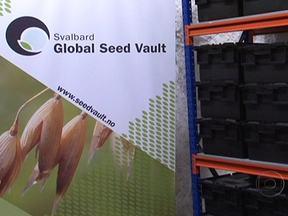 Arca com amostras de sementes é construída debaixo das terras na Noruega - Em Svalbard, na Noruega, uma arca guarda amostras de sementes de todos os vegetais comestíveis conhecidos. Agora, ela recebeu a primeira remessa da América Latina, com milho e feijão da Venezuela, café da Colômbia, arroz da Guatemala e da Bolívia.